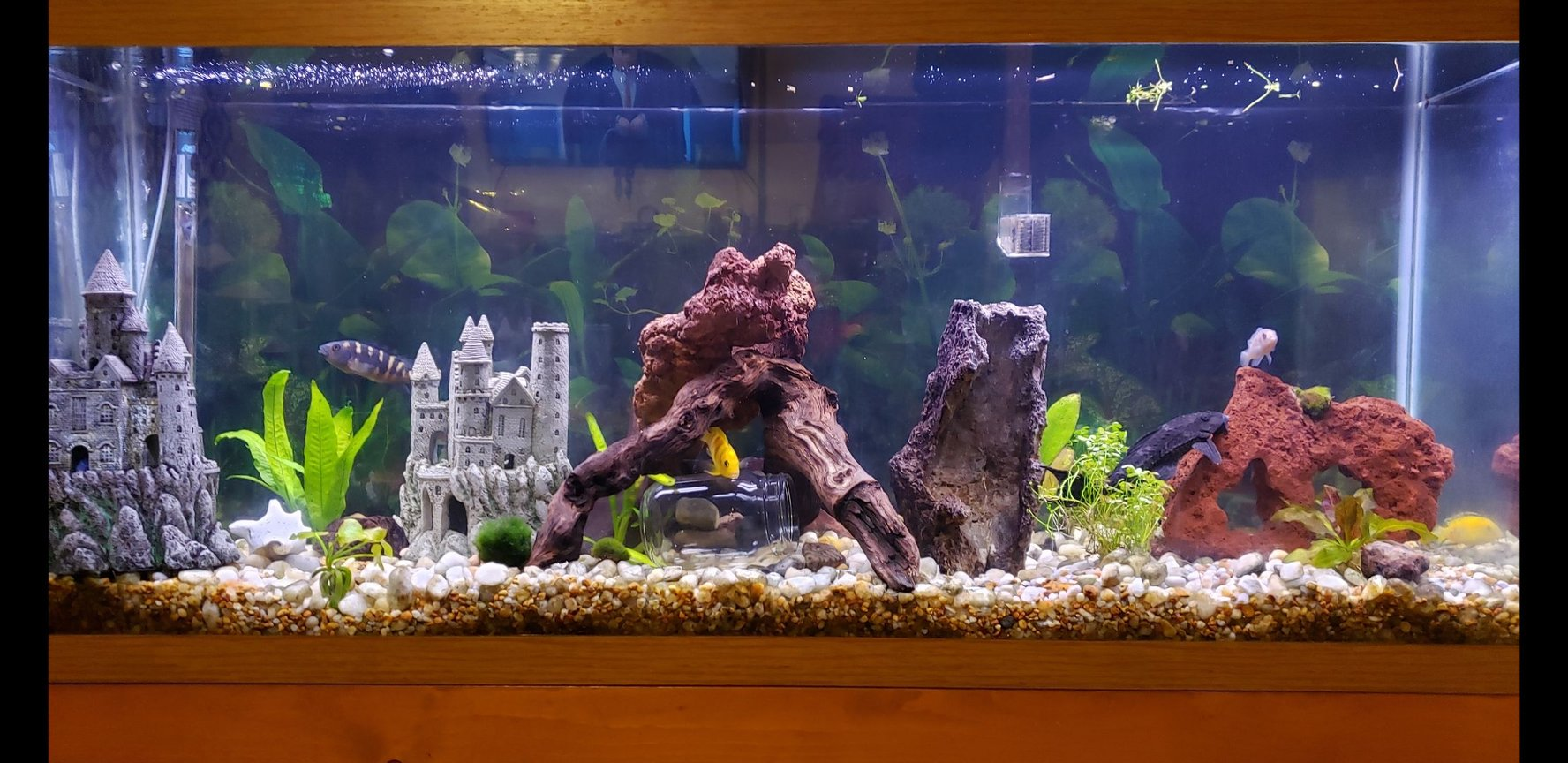 55 gallons freshwater fish tank (mostly fish and non-living decorations) - 55 gal