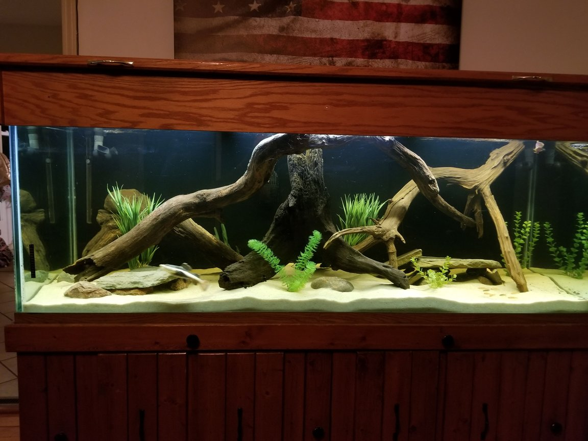 250 gallons freshwater fish tank (mostly fish and non-living decorations) - River Monsters