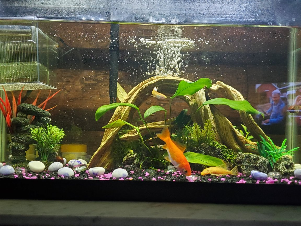 10 gallons freshwater fish tank (mostly fish and non-living decorations) - My fish tank.
