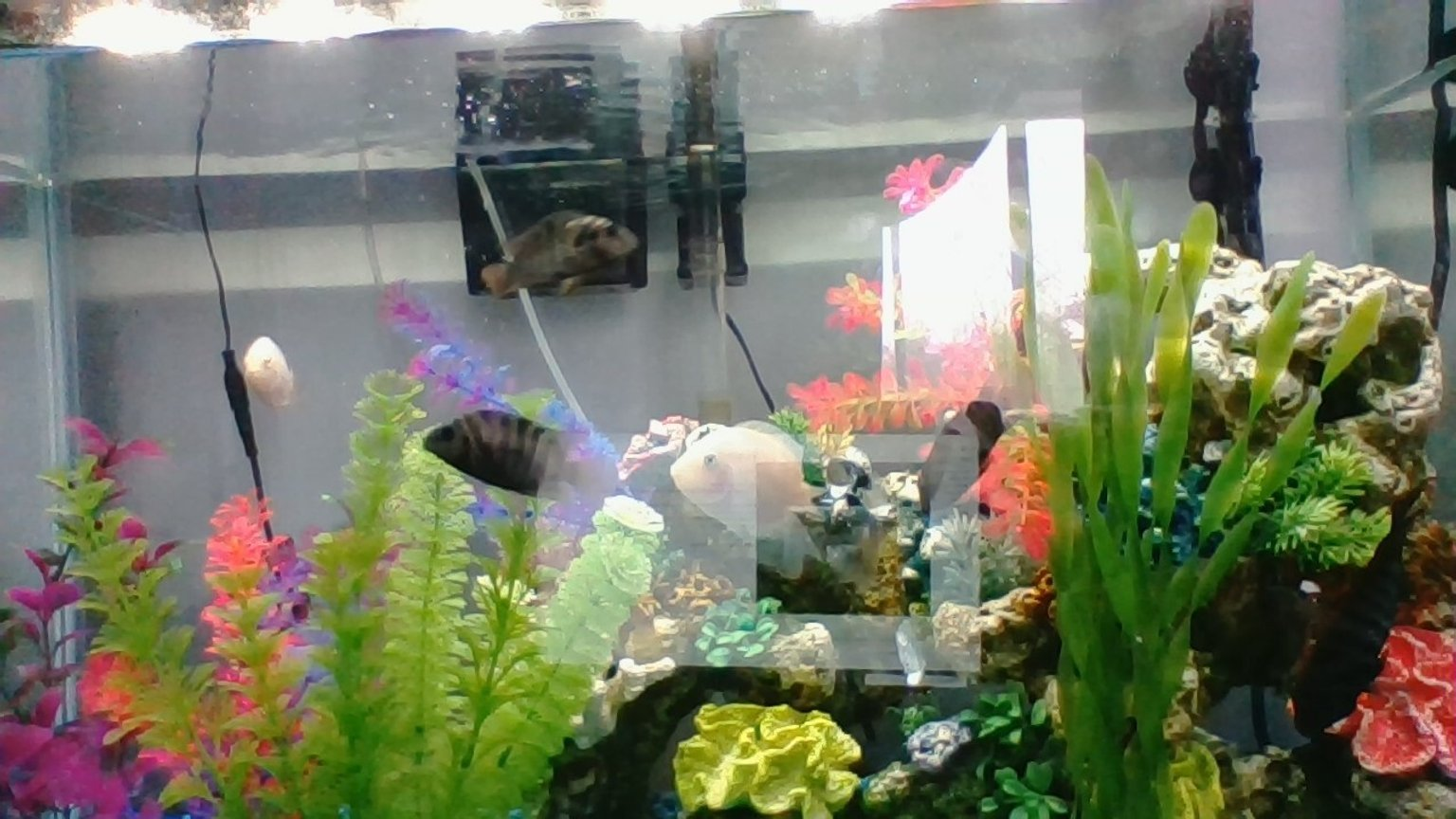 30 gallons freshwater fish tank (mostly fish and non-living decorations) - my tank please let me know if im doing anything wrong or need to improve anything