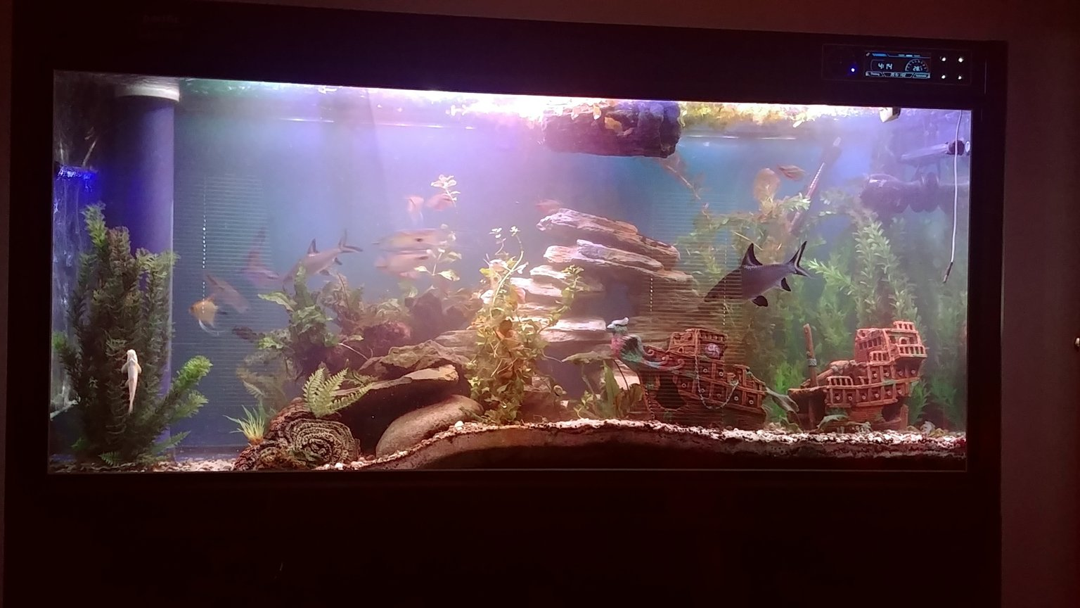 135 gallons freshwater fish tank (mostly fish and non-living decorations) - New layout design with a slight drop off point