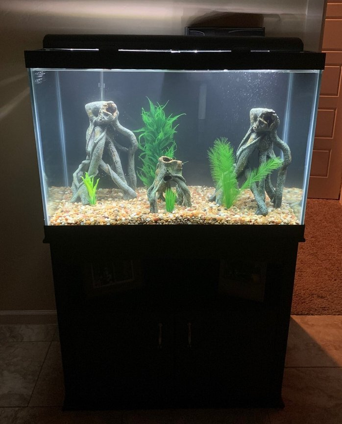 65 gallons freshwater fish tank (mostly fish and non-living decorations) - 65 g