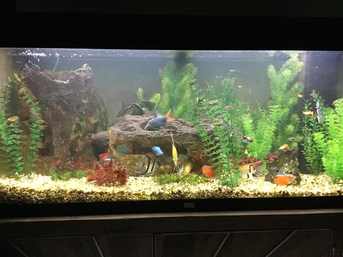 35 gallons freshwater fish tank (mostly fish and non-living decorations) - Full veiw