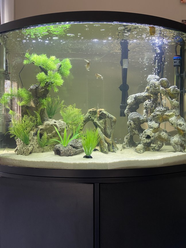 36 gallons freshwater fish tank (mostly fish and non-living decorations) - 36g Freshwater Community Tank