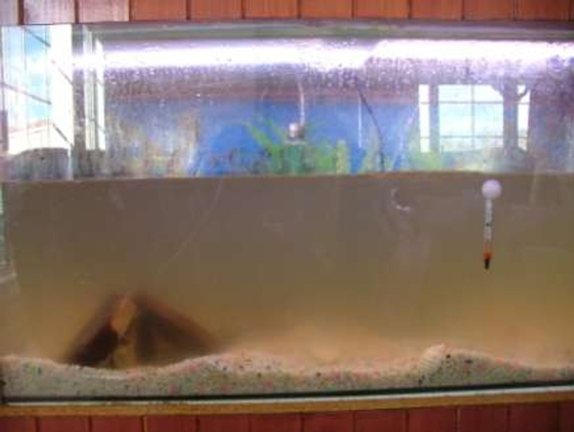 1 gallon freshwater fish tank (mostly fish and non-living decorations) - What not to do.