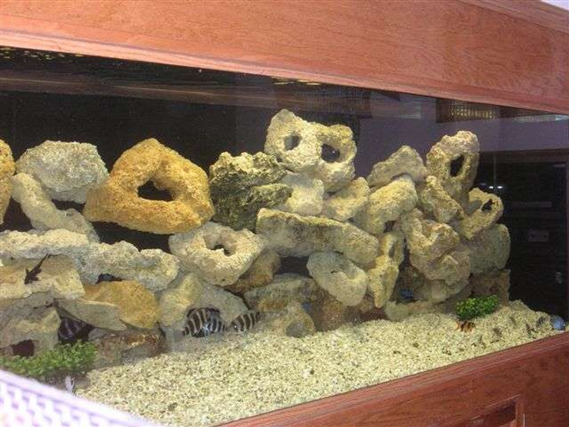 180 gallons freshwater fish tank (mostly fish and non-living decorations) - My freshwater tank