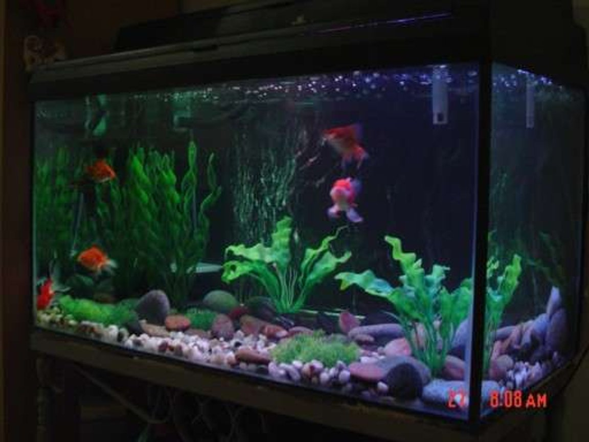 30 gallons freshwater fish tank (mostly fish and non-living decorations) - My first goldfish tank