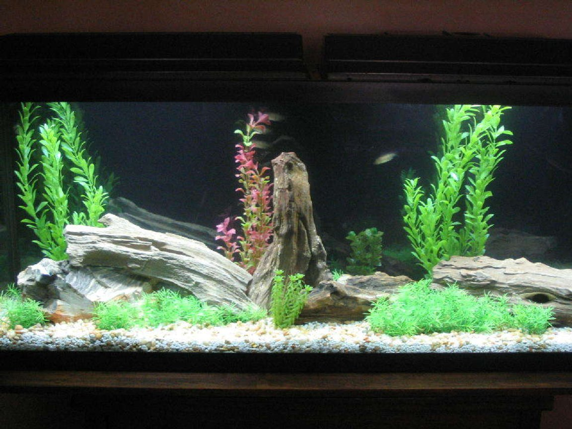 55 gallons freshwater fish tank (mostly fish and non-living decorations) - NEW 55 GALLON TANK
