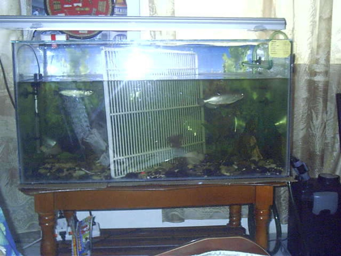 300 gallons freshwater fish tank (mostly fish and non-living decorations) - hh