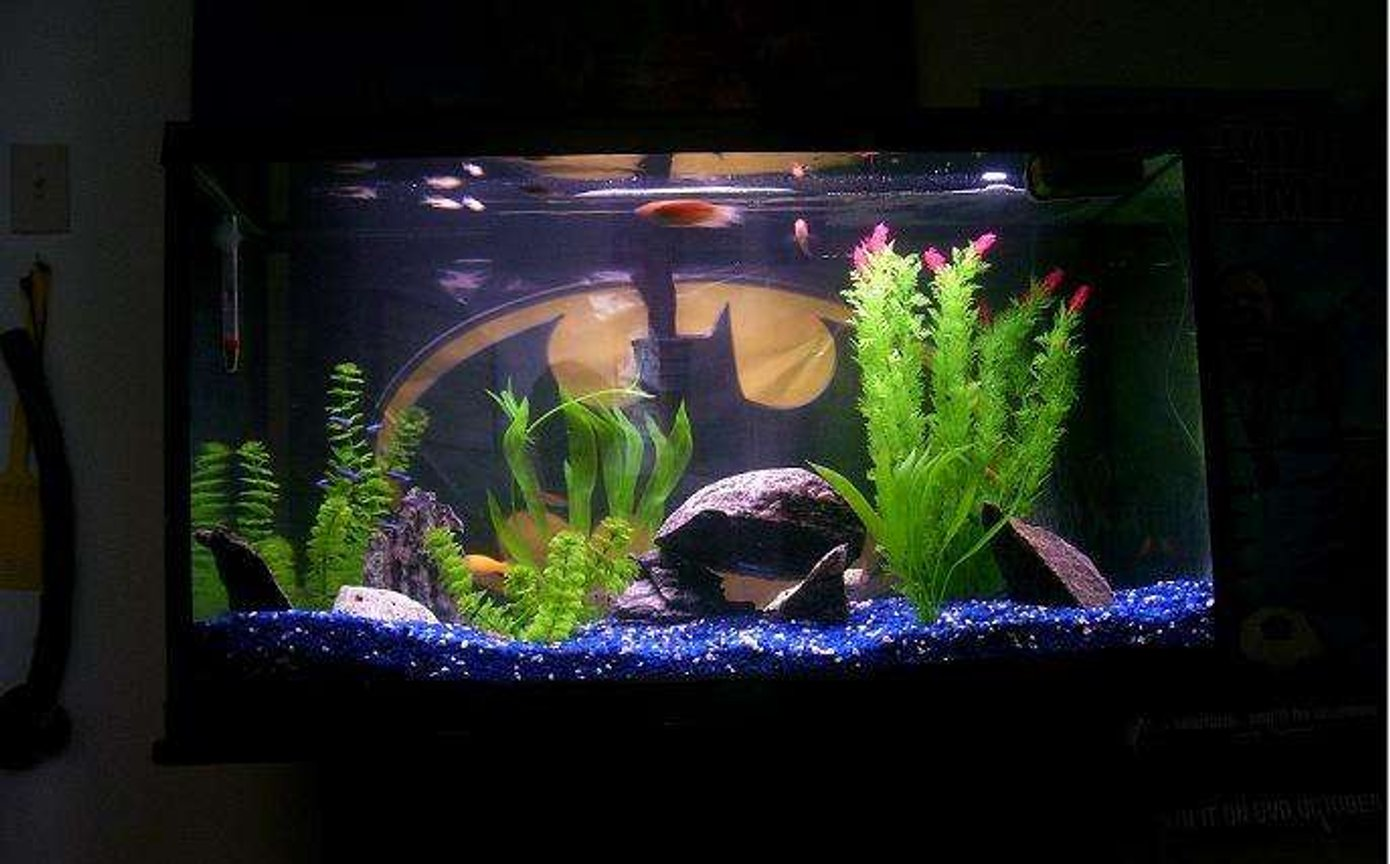 55 gallons freshwater fish tank (mostly fish and non-living decorations) - ya kno