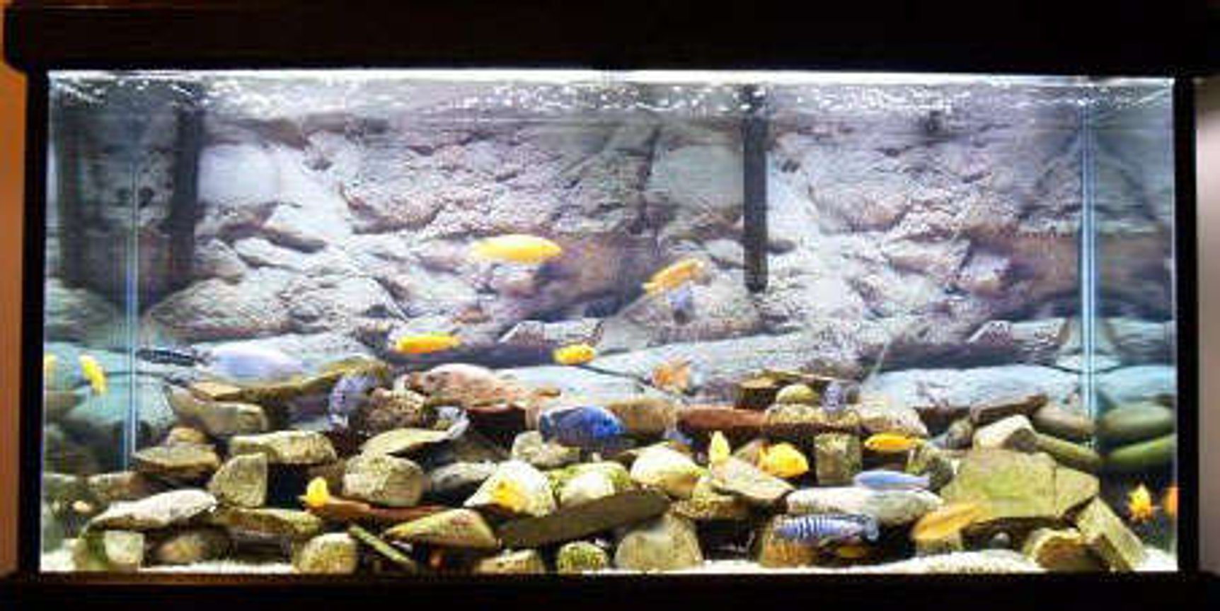 55 gallons freshwater fish tank (mostly fish and non-living decorations) - j