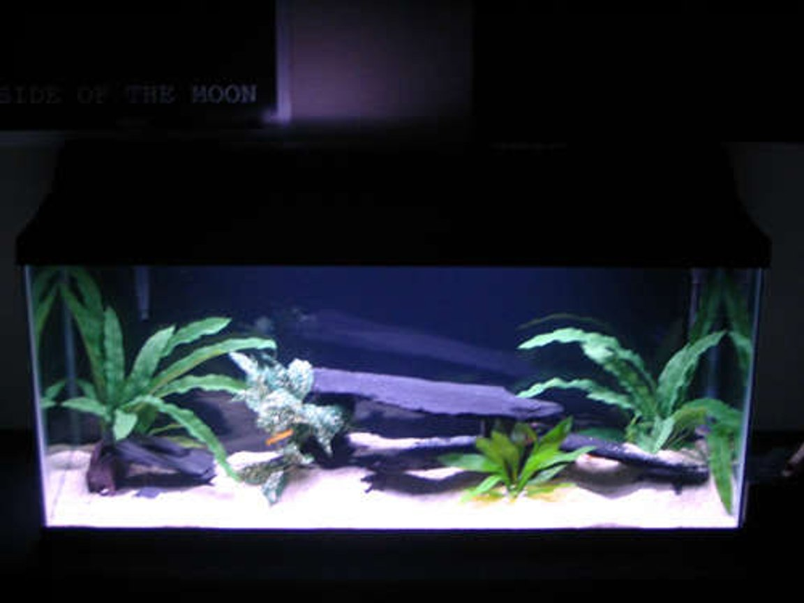 30 gallons freshwater fish tank (mostly fish and non-living decorations) - Whole tank