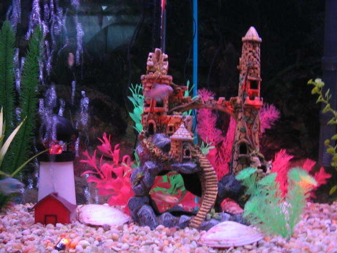 55 gallons freshwater fish tank (mostly fish and non-living decorations) - closeup 2