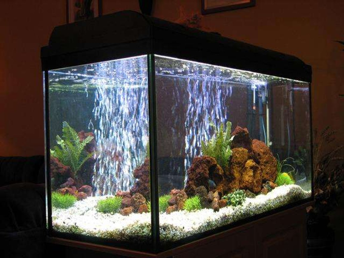 50 gallons freshwater fish tank (mostly fish and non-living decorations) - Malawi tank