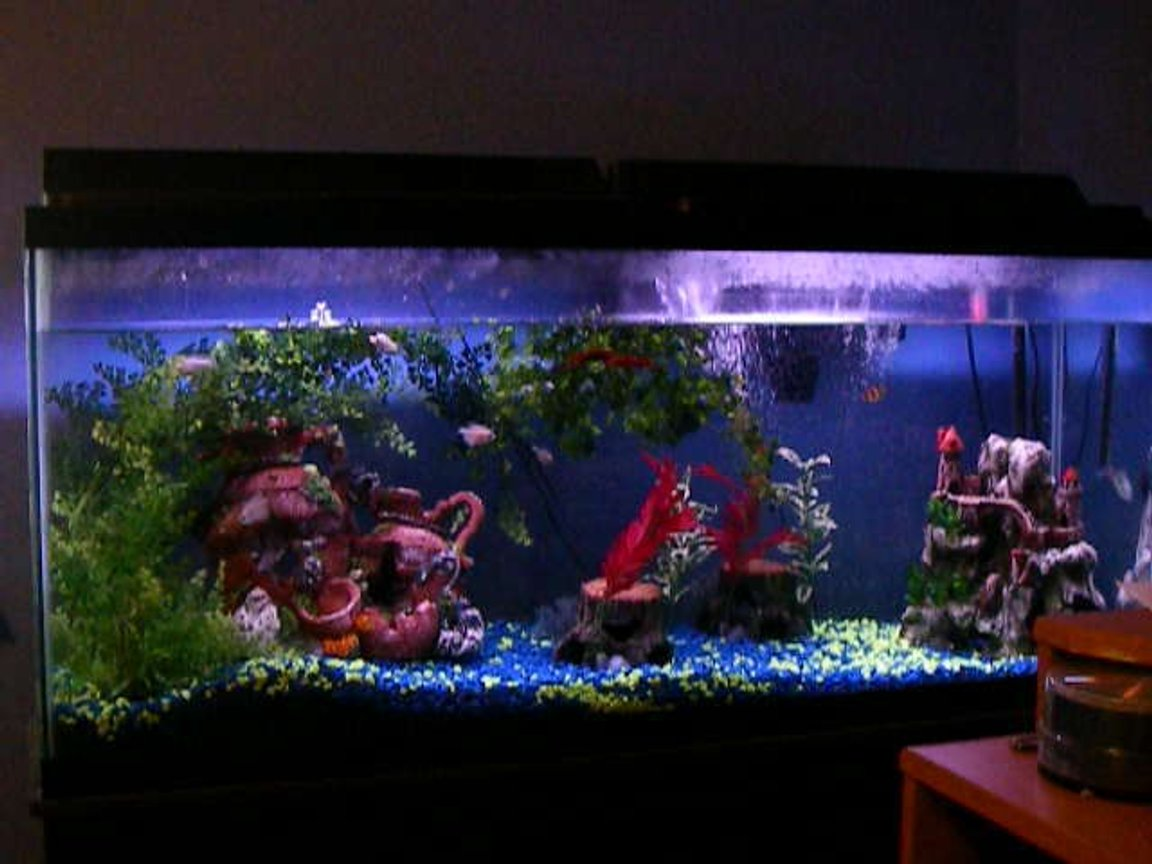 55 gallons freshwater fish tank (mostly fish and non-living decorations) - none