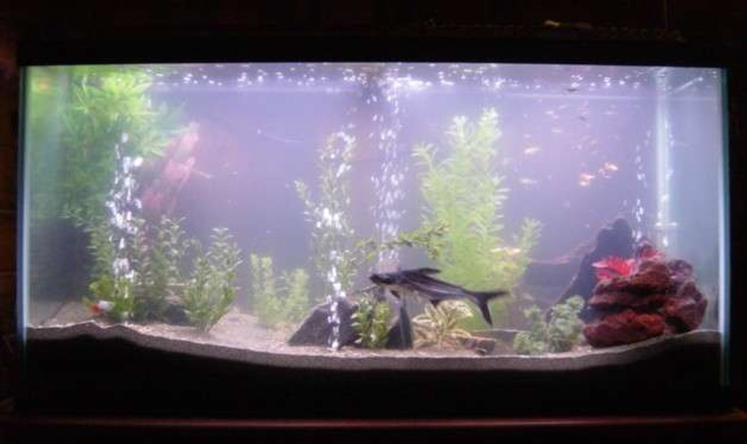 90 gallons freshwater fish tank (mostly fish and non-living decorations) - Here is our 90 gallon!