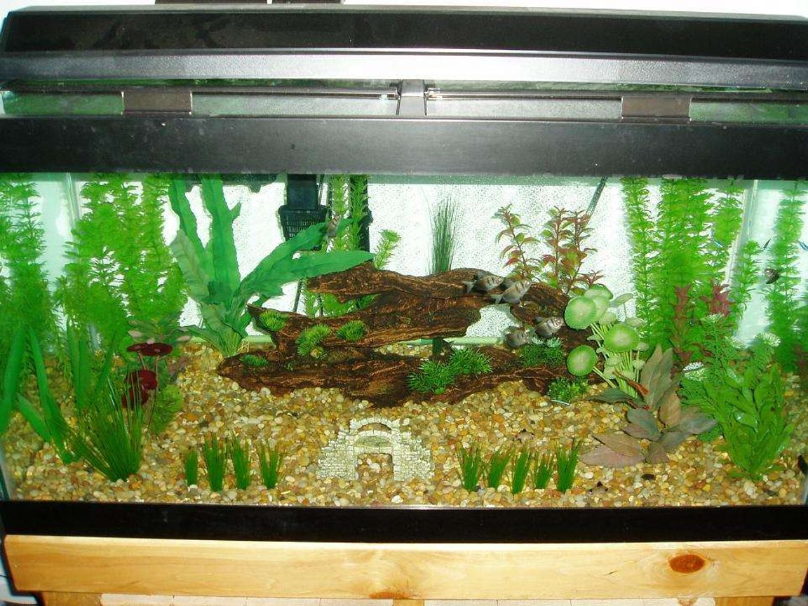 50 gallons freshwater fish tank (mostly fish and non-living decorations) - Black Skirts
