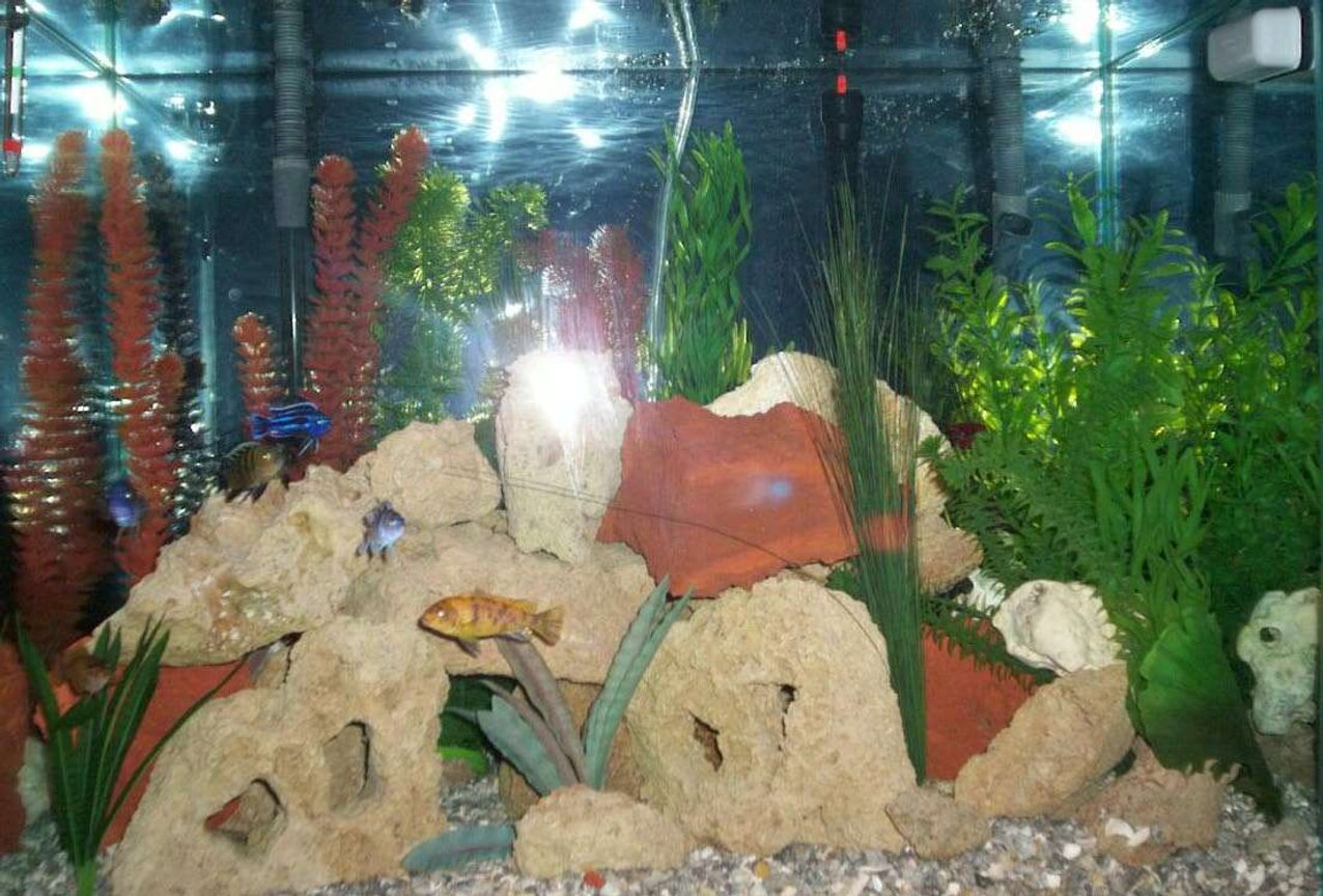 55 gallons freshwater fish tank (mostly fish and non-living decorations) - 55 gallon freshwater w/ African cichlids
