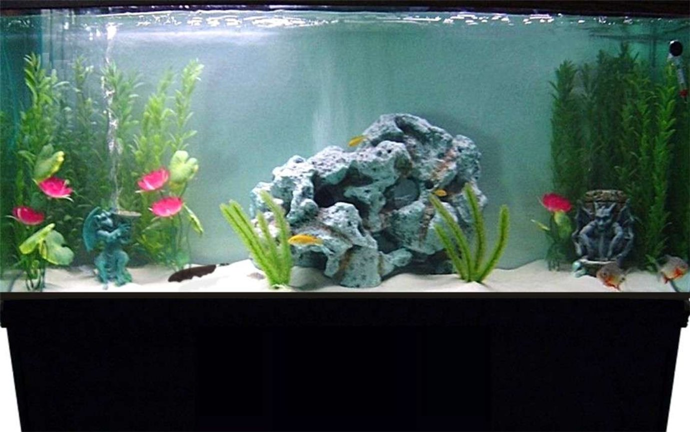 55 gallons freshwater fish tank (mostly fish and non-living decorations) - Here's a pic of my 55 gallon tank.