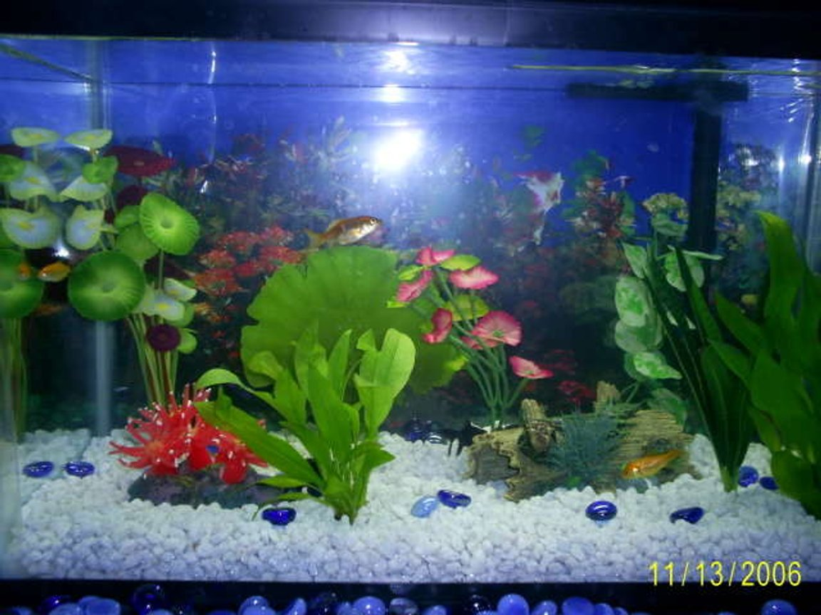 10 gallons freshwater fish tank (mostly fish and non-living decorations) - And another.