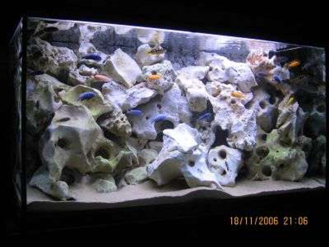 100 gallons freshwater fish tank (mostly fish and non-living decorations) - 400 ltr mbuna malawi