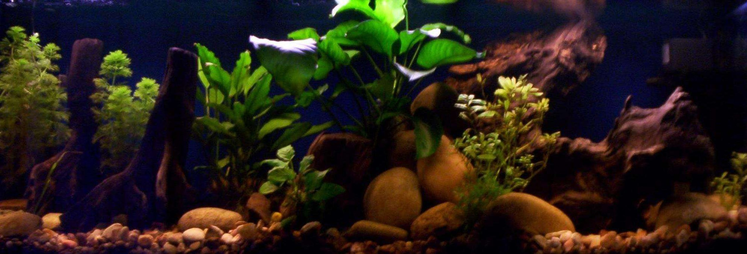 80 gallons freshwater fish tank (mostly fish and non-living decorations) - Fresh Water Setup