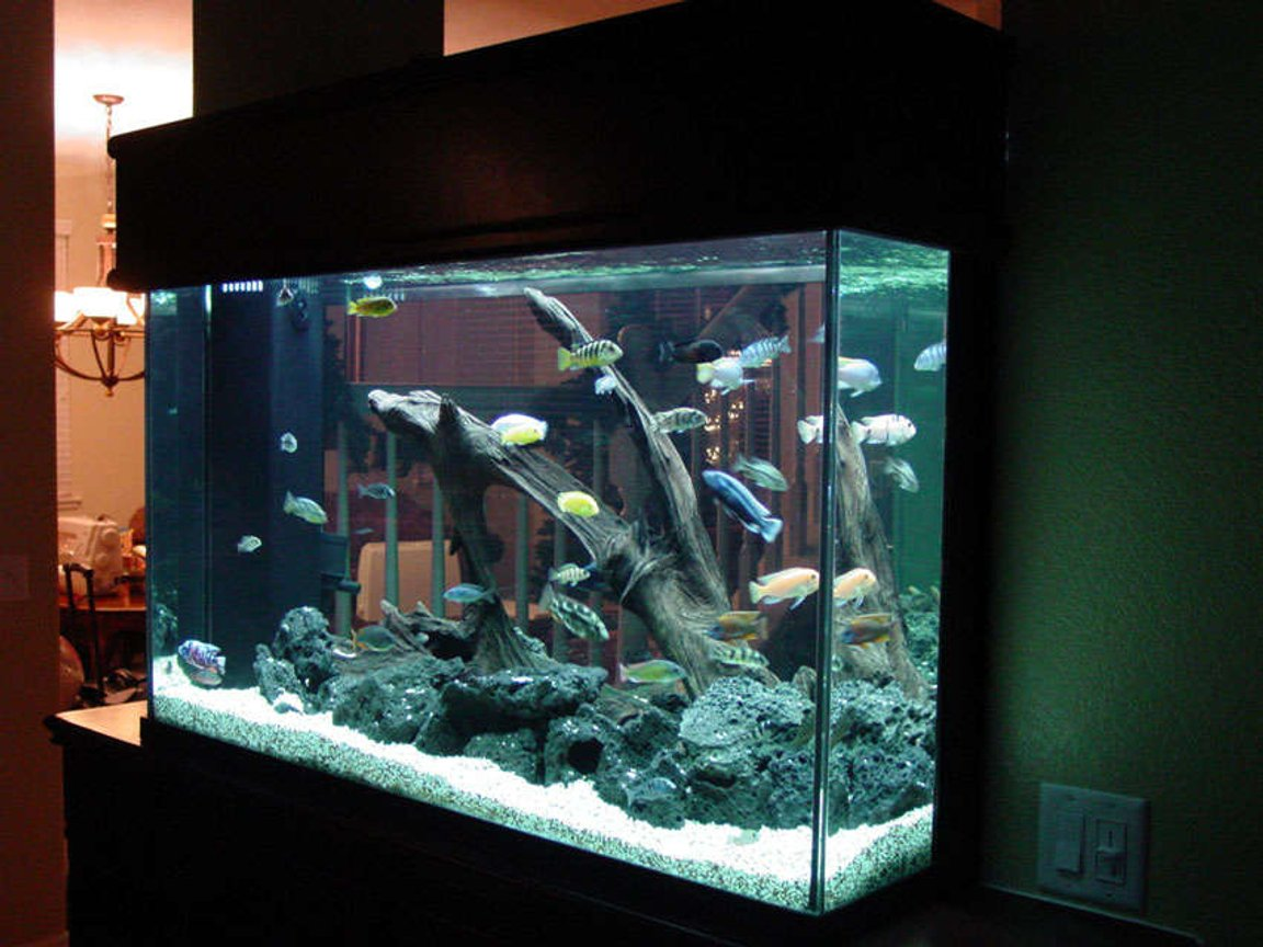 155 gallons freshwater fish tank (mostly fish and non-living decorations) - Here's another view of all my fish.