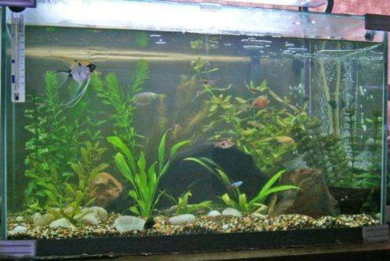 15 gallons freshwater fish tank (mostly fish and non-living decorations) - My 15 Gallon Tank!