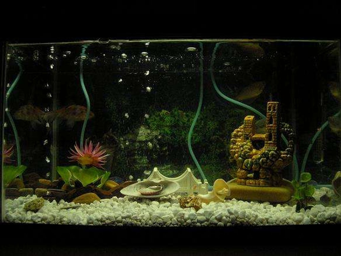 10 gallons freshwater fish tank (mostly fish and non-living decorations) - Freshwater tank. 3 hose valve system installed. Pure water.