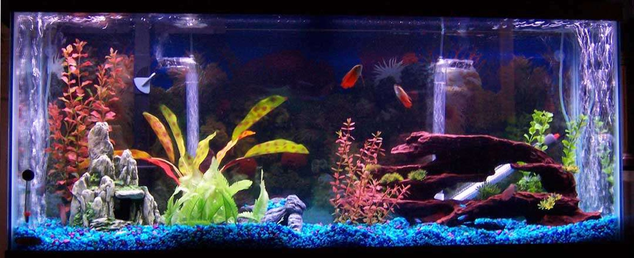 55 gallons freshwater fish tank (mostly fish and non-living decorations) - my 55 gallon tank, its about 3 month old have some fish in there.