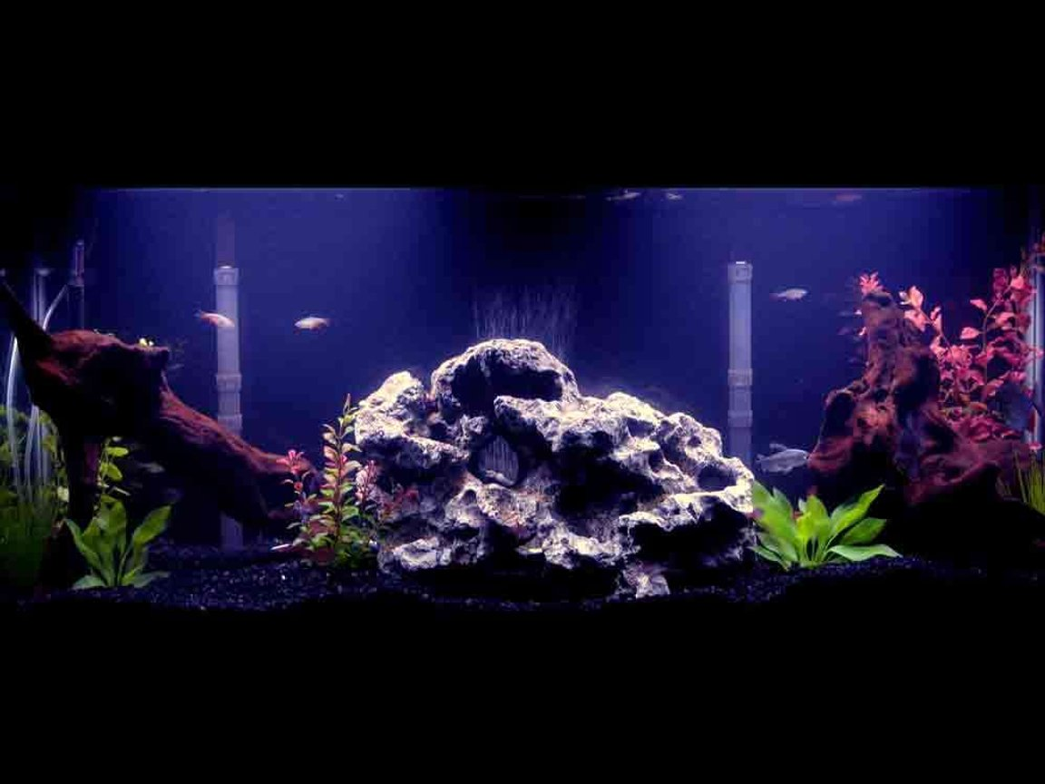55 gallons freshwater fish tank (mostly fish and non-living decorations) - 55 gallon tank