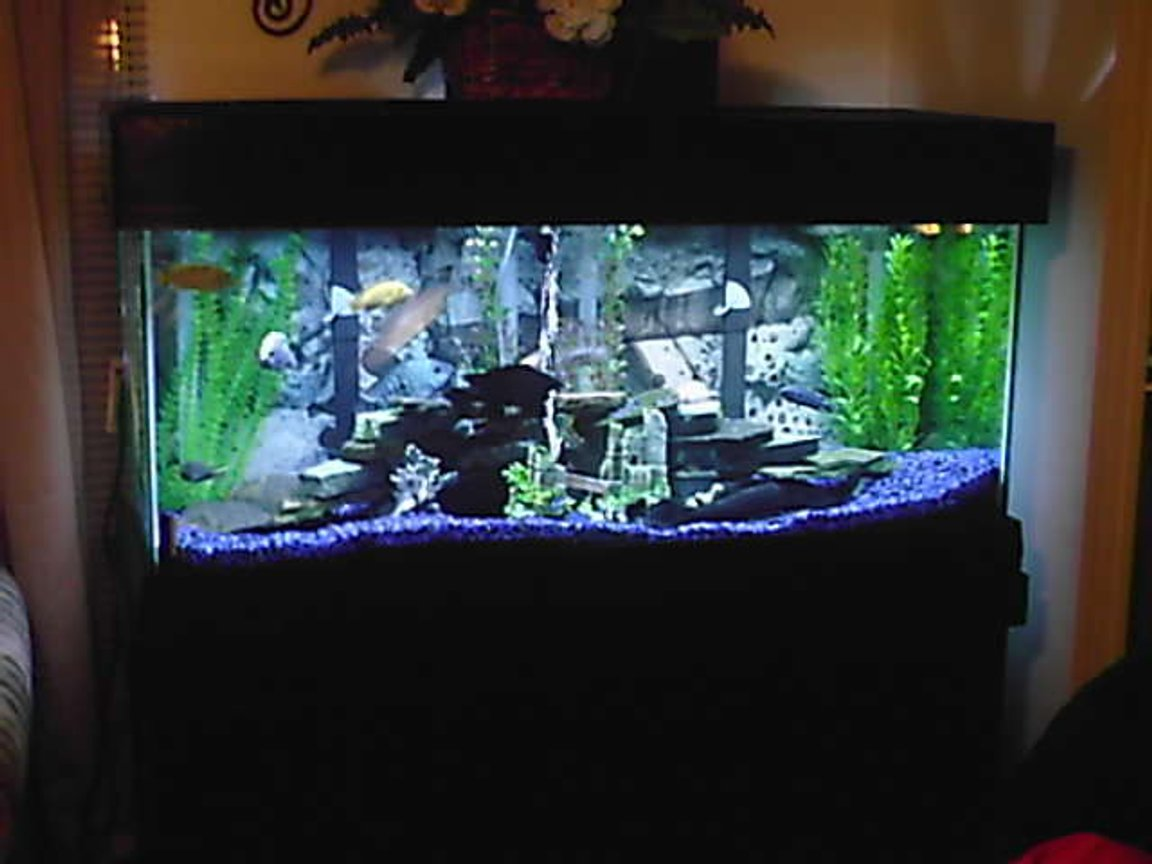 75 gallons freshwater fish tank (mostly fish and non-living decorations) - .