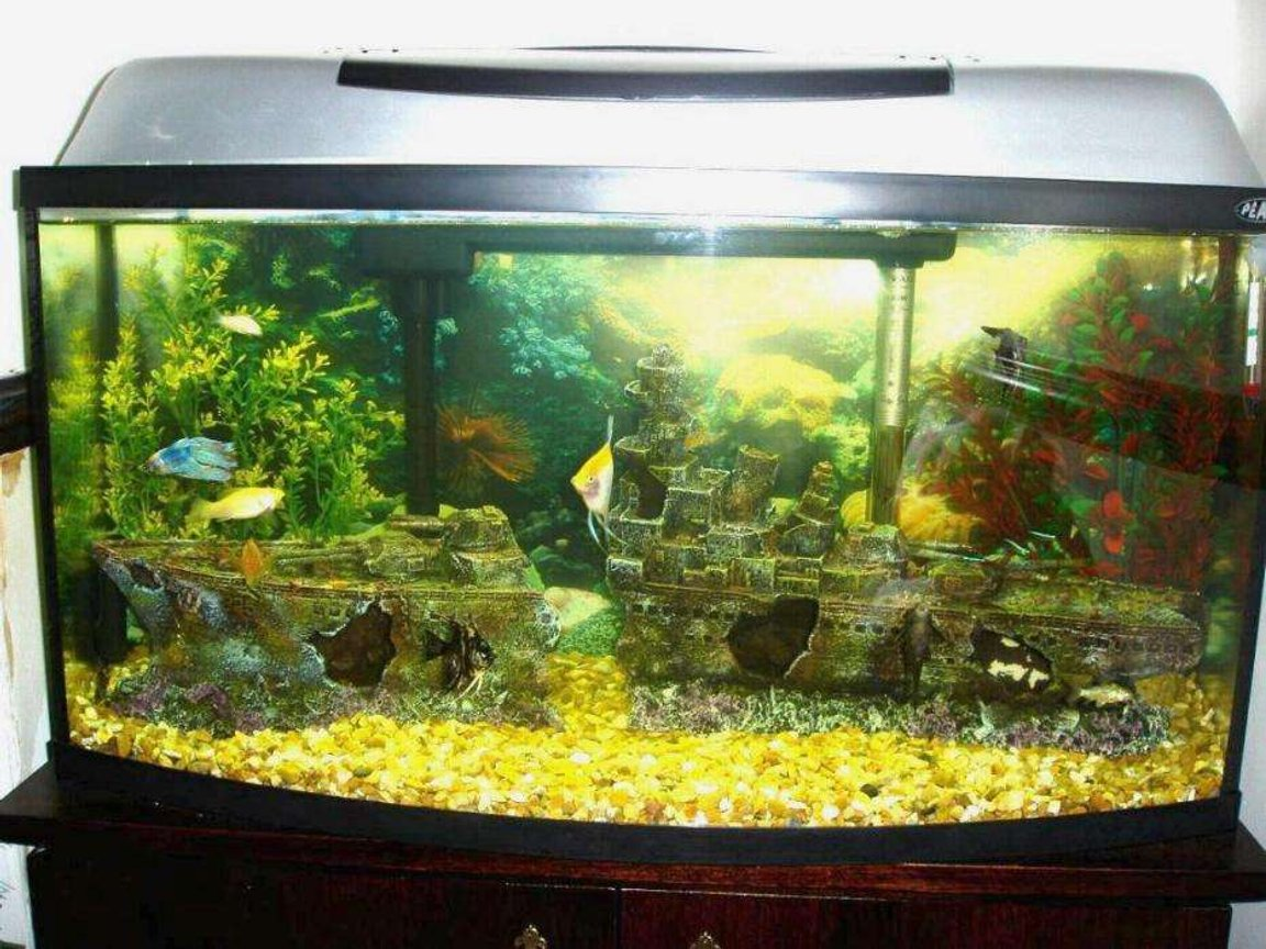 110 gallons freshwater fish tank (mostly fish and non-living decorations) - Me Tank ...hell yeah