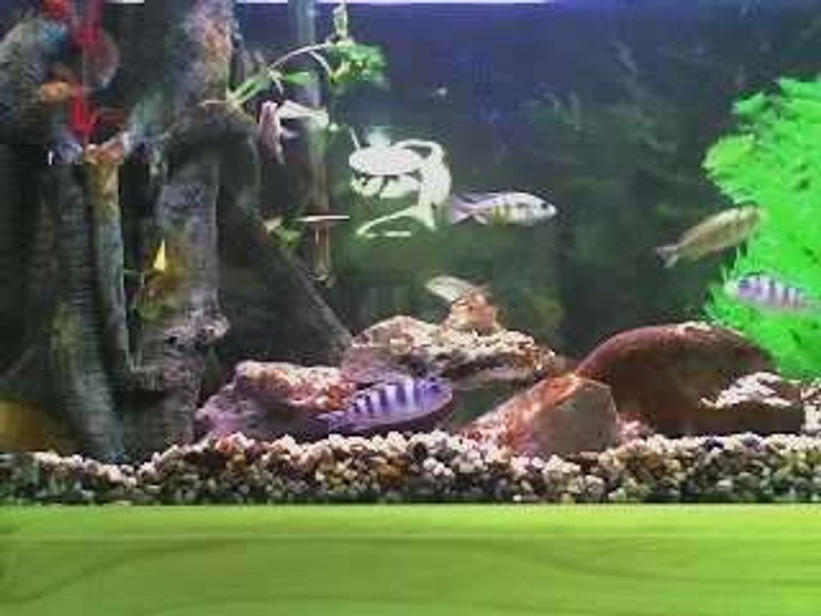 freshwater fish tank (mostly fish and non-living decorations) - My 2ft tank. This was taken when i first set it up.