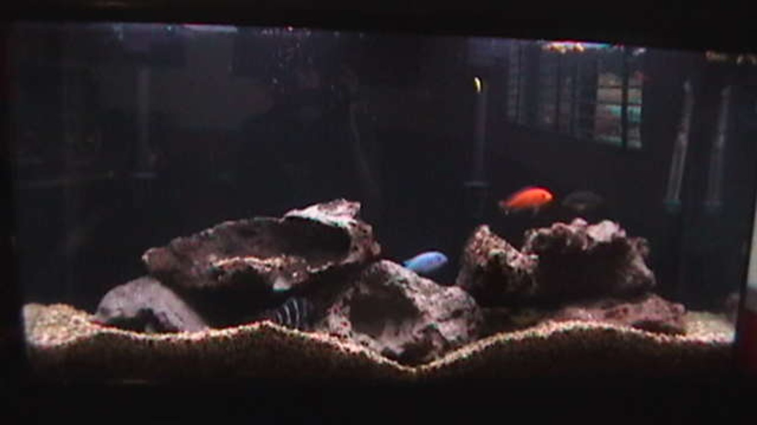 45 gallons freshwater fish tank (mostly fish and non-living decorations) - 45 Gallon African Cichlid Aquarium