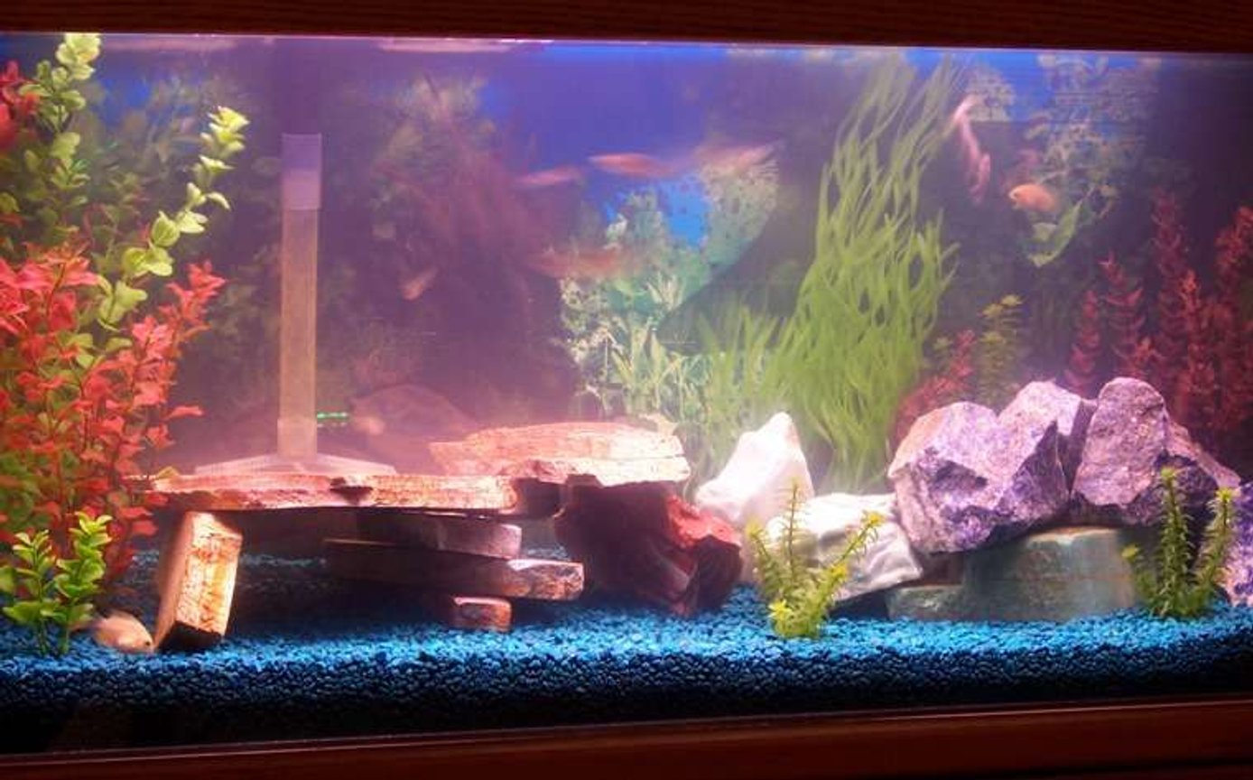55 gallons freshwater fish tank (mostly fish and non-living decorations) - My tank.