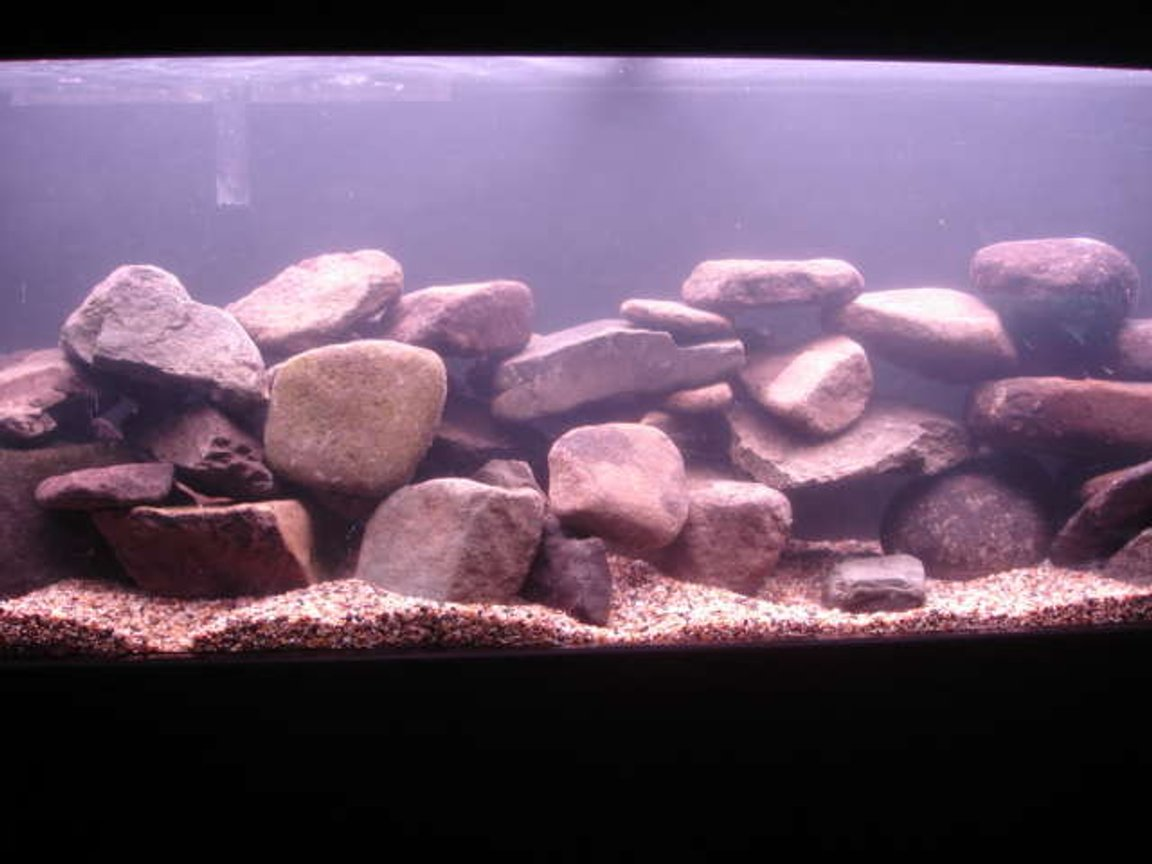 50 gallons freshwater fish tank (mostly fish and non-living decorations) - Malawi tank 1 hour old with no fish yet :(