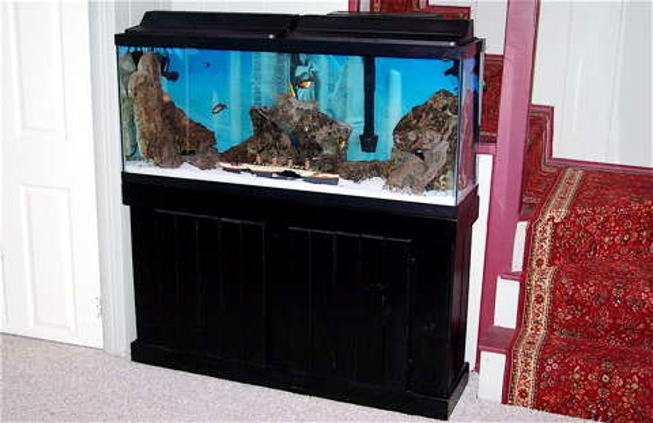 55 gallons freshwater fish tank (mostly fish and non-living decorations) - 55 GALLON TANK FRESHWATER