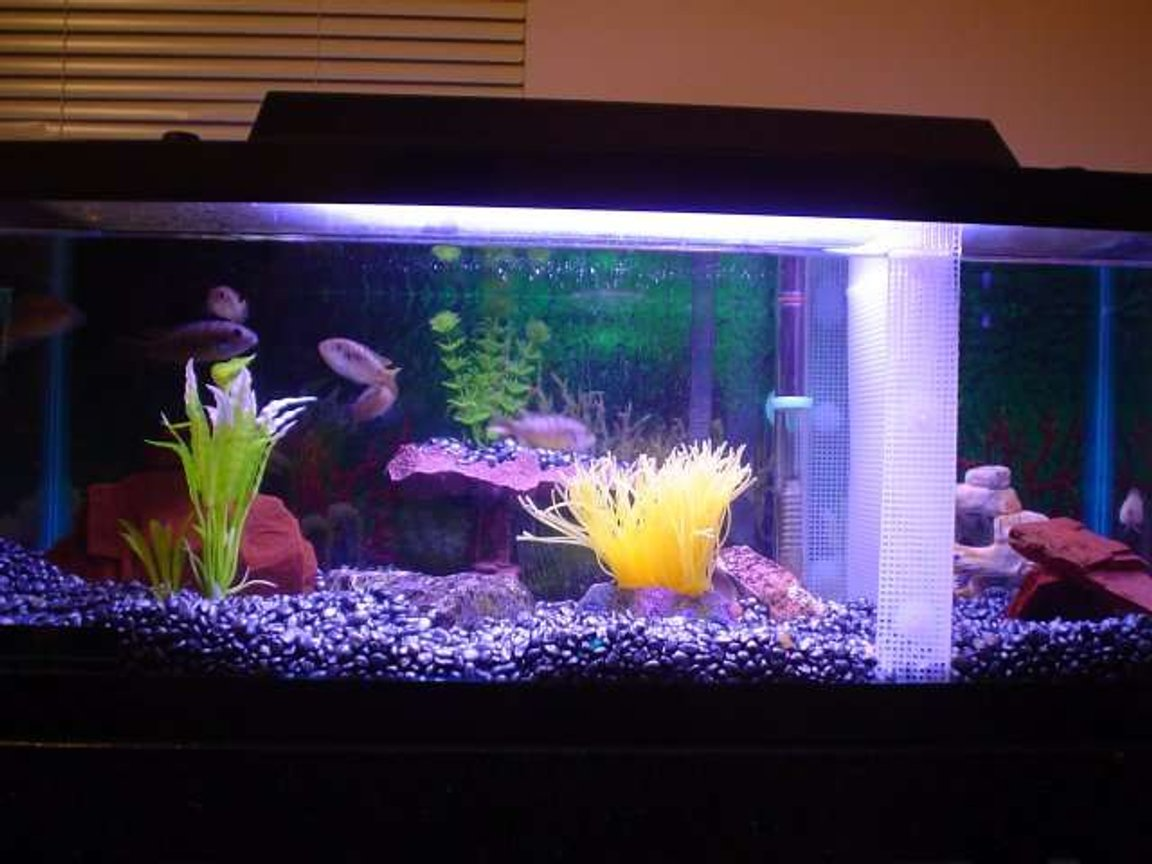 20 gallons freshwater fish tank (mostly fish and non-living decorations) - Lookin' Good