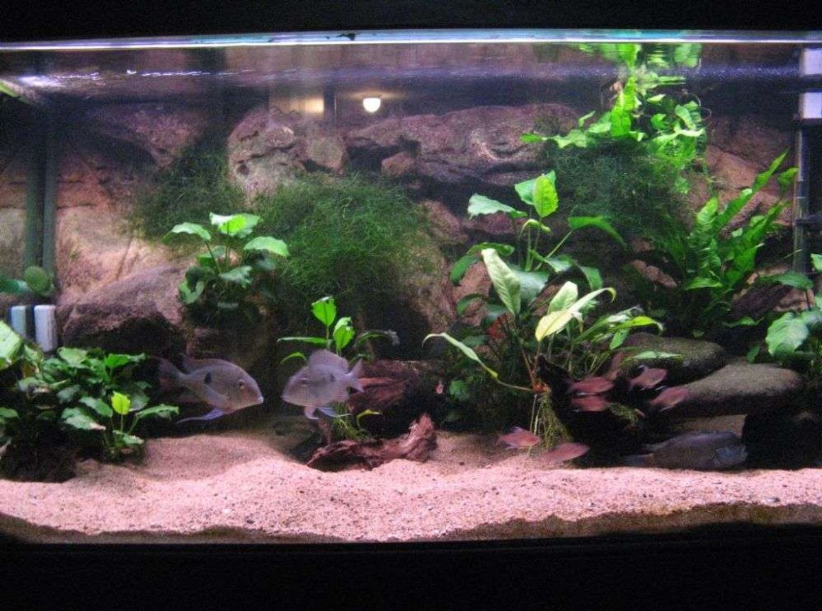 90 gallons freshwater fish tank (mostly fish and non-living decorations) - my large 4ft.