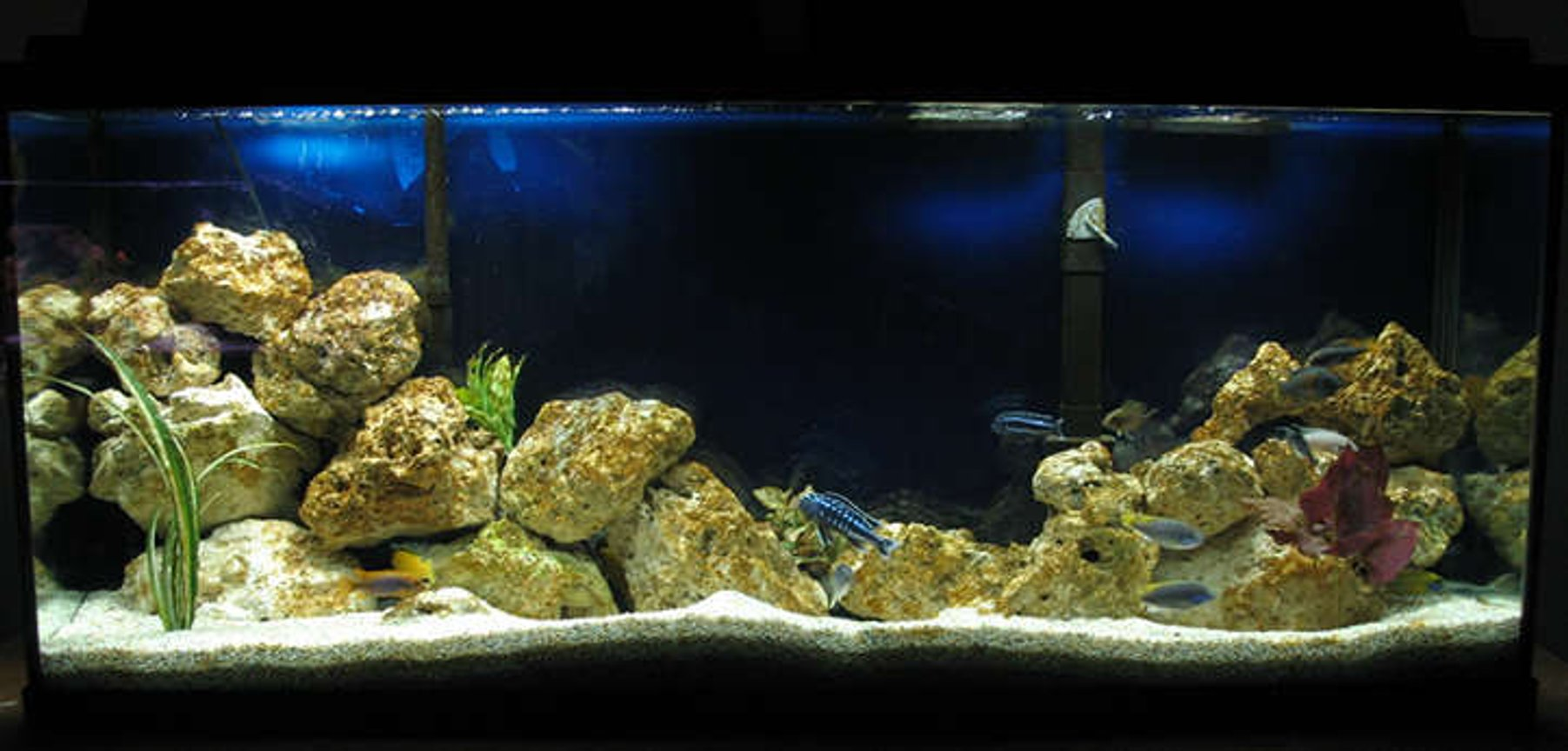 55 gallons freshwater fish tank (mostly fish and non-living decorations) - Malawi Mbuna and a couple of Tangs.