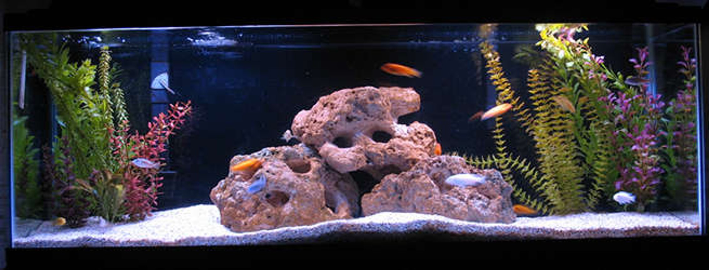 55 gallons freshwater fish tank (mostly fish and non-living decorations) - Zebras, Exasperatus, and Tropheops.