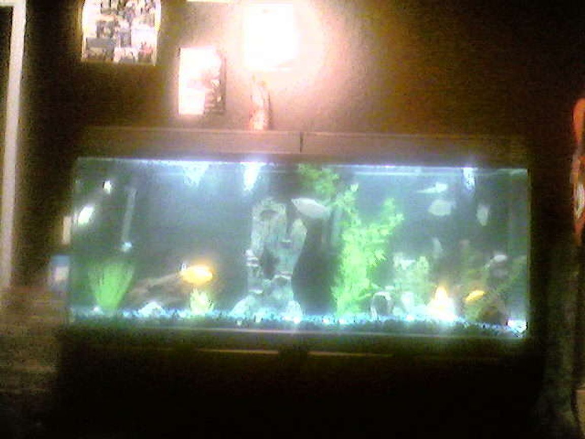 85 gallons freshwater fish tank (mostly fish and non-living decorations) - 85 gallon eclispe