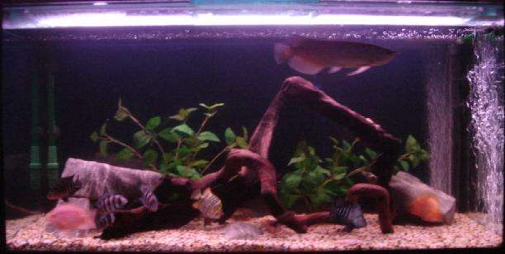 120 gallons freshwater fish tank (mostly fish and non-living decorations) - my tank