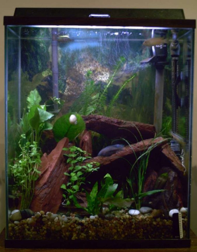 20 gallons freshwater fish tank (mostly fish and non-living decorations) - My 20xh.