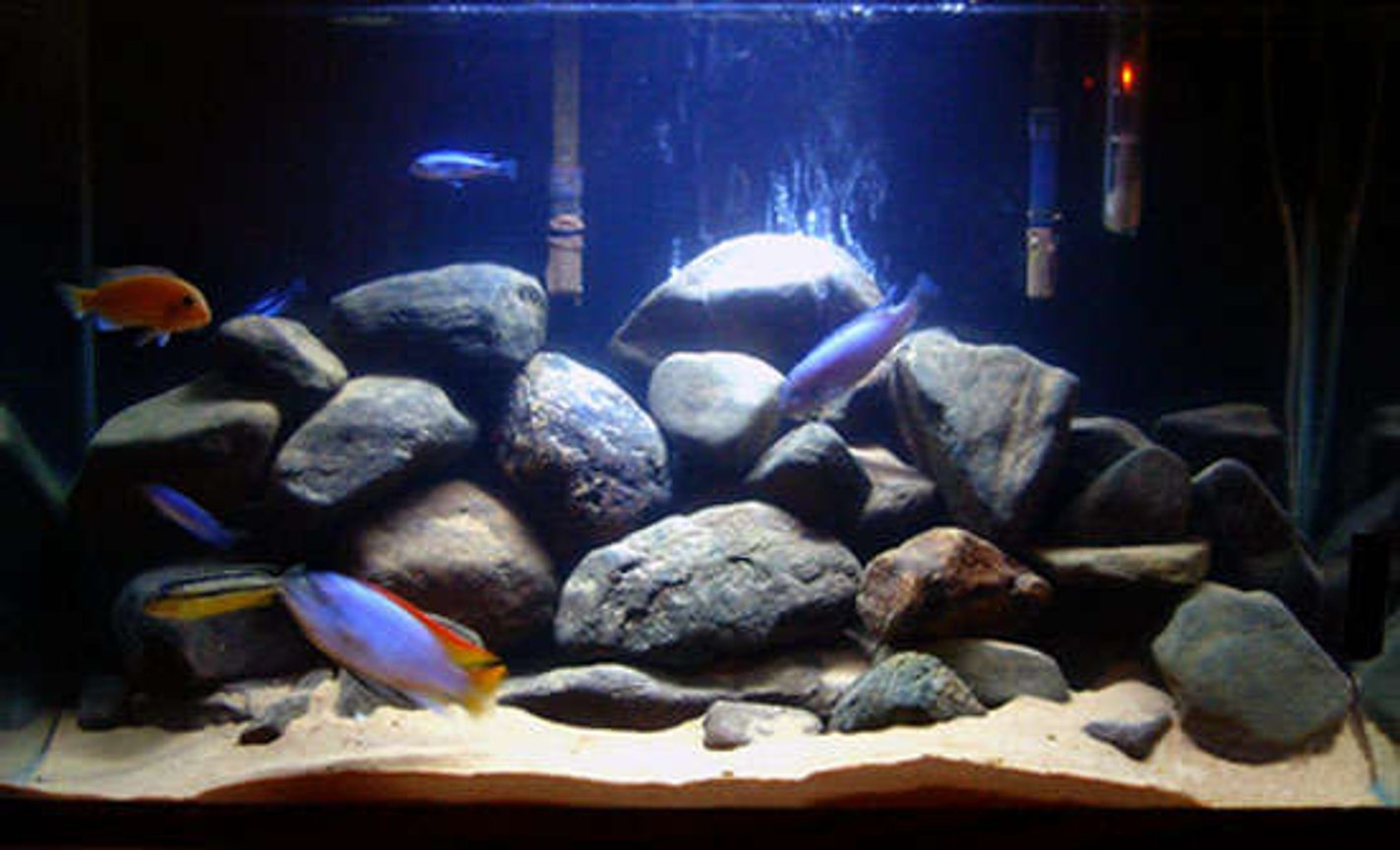 29 gallons freshwater fish tank (mostly fish and non-living decorations) - Mbuna