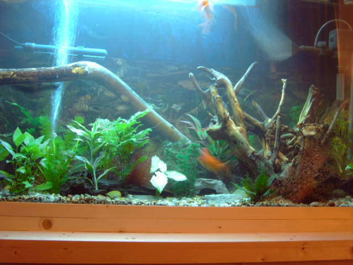 75 gallons freshwater fish tank (mostly fish and non-living decorations) - another addition to my tank, thats it now just gonna add more fish don't wanna over do it!