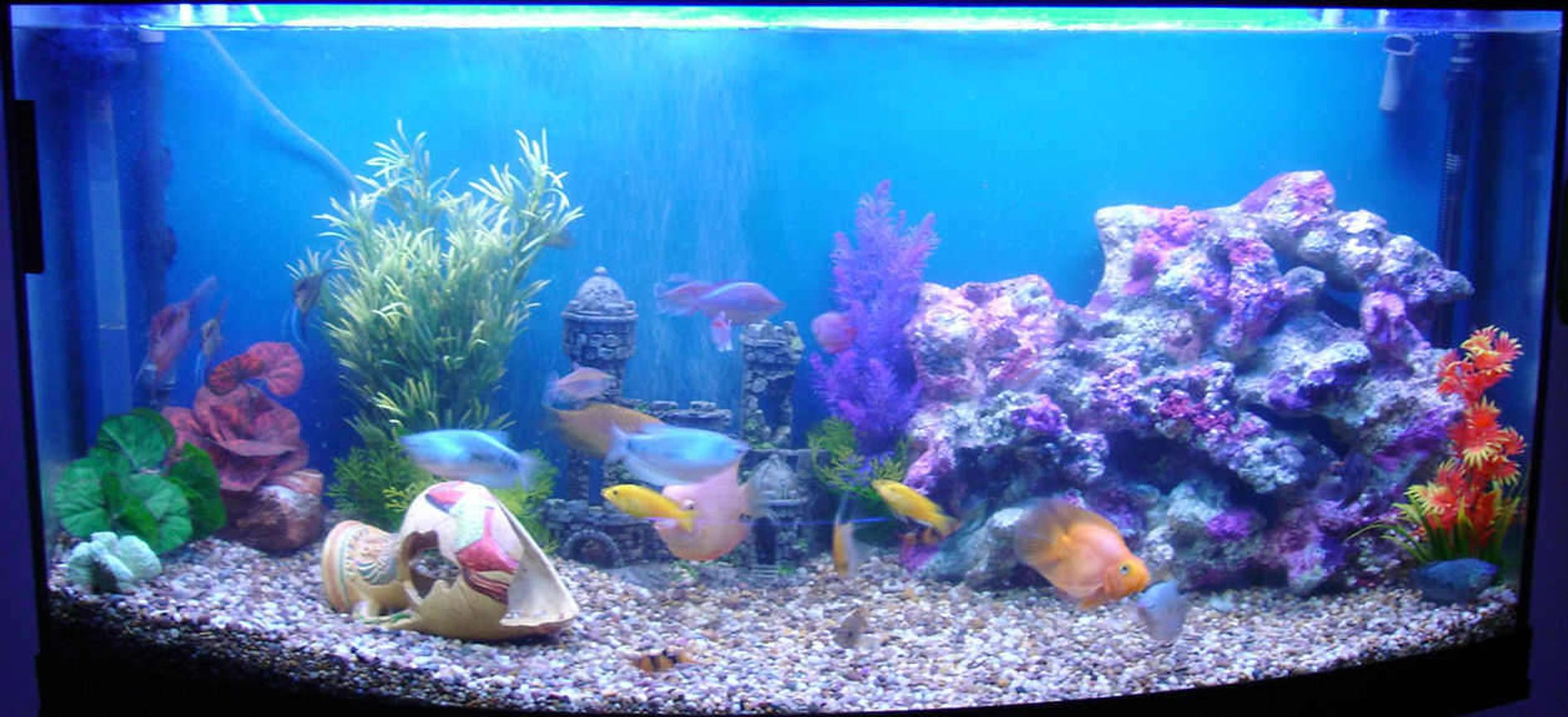 70 gallons freshwater fish tank (mostly fish and non-living decorations) - 260litre curved front Freshwater Fun tank!