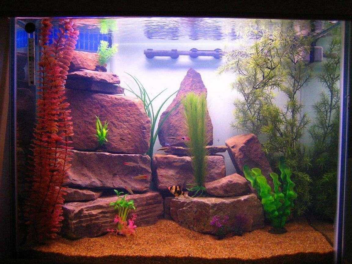 40 gallons freshwater fish tank (mostly fish and non-living decorations) - Freshwater tank