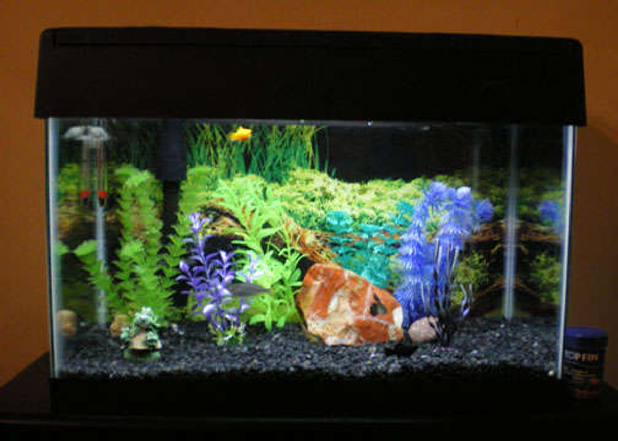 55 gallons freshwater fish tank (mostly fish and non-living decorations) - 10gal w/eclipse hood
